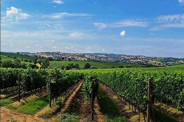 Sumadija Full Day Royal Wine Tour...