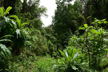 Guided Day Trip to the Lush Forest of Menagesha and Historic Town of Addis Alem