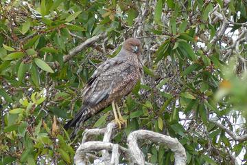 Birdwatching and Wildlife Noosa Biosphere Half-Day Experience