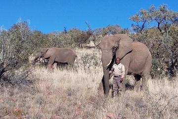 Elephant Walk 4-Hour Guided Tour from Johannesburg