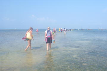 Kwale Island Guided Day Tour from...