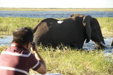 Chobe River Game Cruise