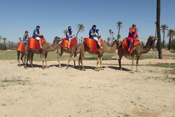 Marrakech Palm Grove Camel Ride with Tea Break