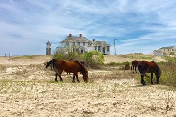 Outer Banks Wild Horse 2-Hour Tour By...