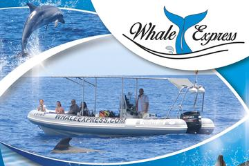 Tenerife Whale Watching Cruise