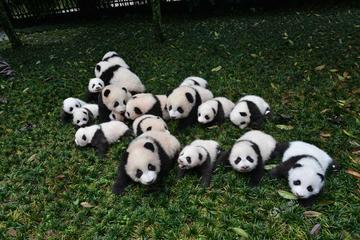 One day as Volunteer: Big Panda in Sichuan