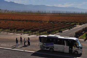 Excursión vinícola en bus con paradas fijas desde Mendoza