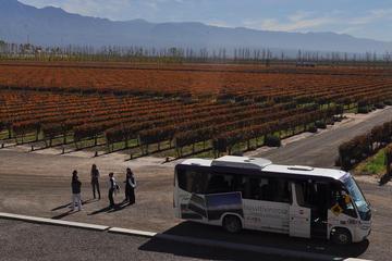 Hop-on-Hop-off-Weintour ab Mendoza