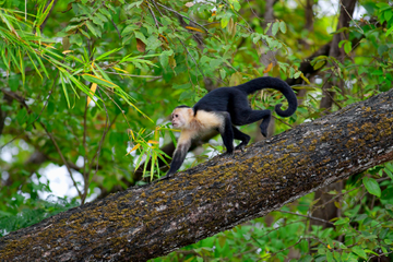 Fauna y flora de Costa Rica en el Parque Nacional Palo Verde