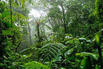 Recorrido de aventura en la selva...