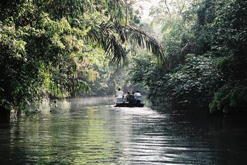 Tortuguero National Park 3-Day Tour...