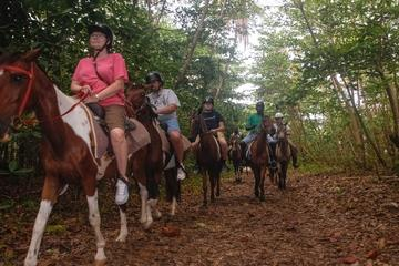 St Lucia Nature Reserve Horseback...