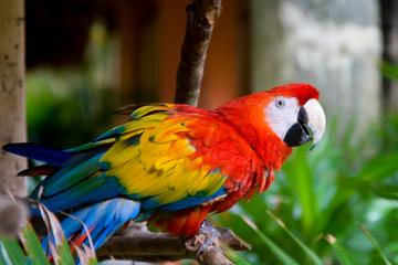 Excursion en bord de mer de Belize: zoo de Belize et visite de la...