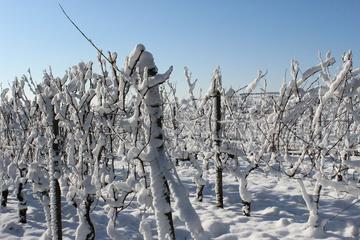 Private Niagara-on-the-Lake Ice Wine Festival Tour