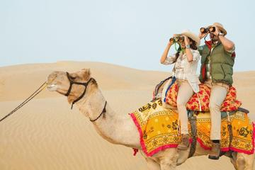 Jaipur: Full-Day (Pink City) Private Tour With Lunch