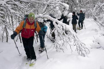 Tromso Tour: Tromsoya Island Snowshoe...