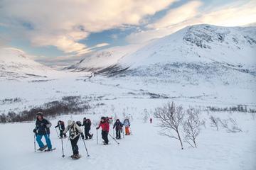 Tromso Whale Island Snowshoe Tour