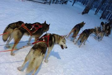 Ruka Snowmobile Adventure with Husky Farm Visit and Husky Sled Ride