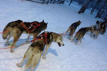 Snowmobile Safari to Husky Farm from...