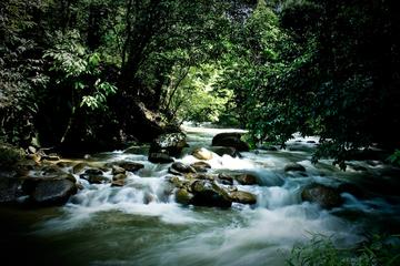 Kuala Lumpur Rainforest and Self-Discovery Experiential Tour