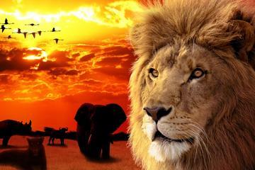 Big 5 Aquila Safari Private Tour