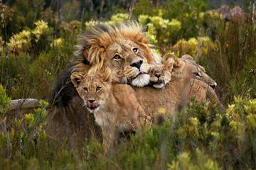 Cheetah outreach Somerset West ...