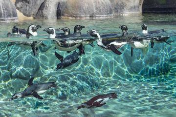 Cheetah,Penguin,Wine tour via Whale ...