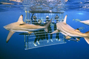 Shark Cage Diving Tour Helderberg and...