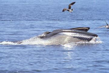 Whale watching in Hermanus Private ...
