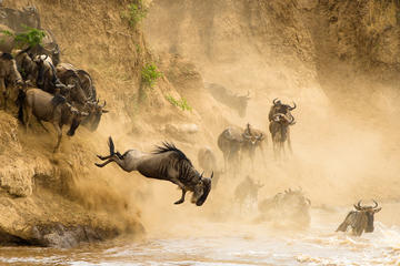3 Days Masai Mara Safari