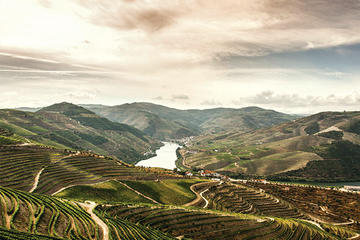 Full-Day Douro Valley Wine and Food Tour
