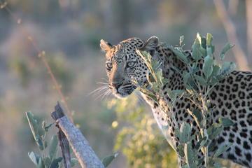 1night 2days Express Kruger National...
