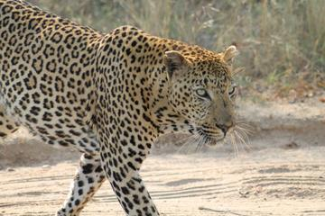 4Days Kruger National Park Overnight...