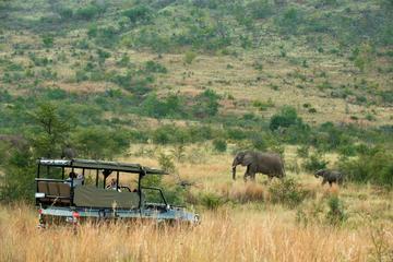 Ganztägig geöffnet Fahrzeug Safari...