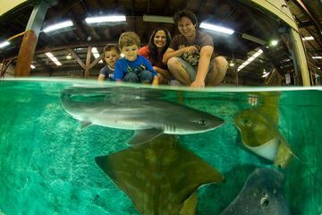 Irukandji Shark and Ray Aquarium Entry Ticket with Optional Shark Experience