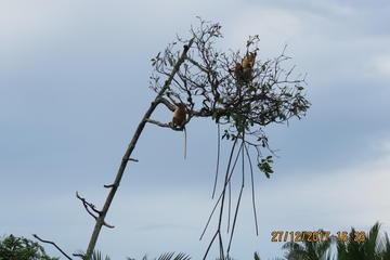 Brunei Proboscis Monkey River Safari & Exclusive Water Village Shore Excursion