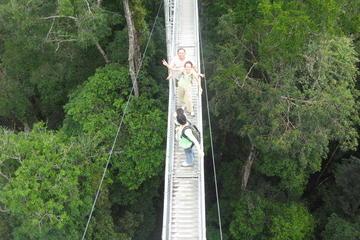 Full Day Temburong National Park Nature Escapade