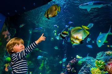 SEA LIFE Helsinki Entrance Ticket