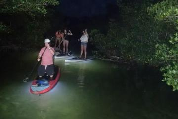Day Trip Night Tour With Lighted Paddles and Boards near Key Largo, Florida