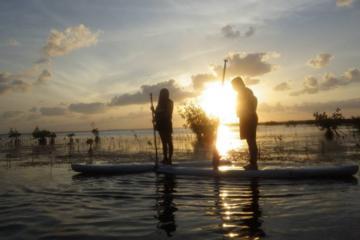 Day Trip Sunset Paddleboard Tour near Key Largo, Florida