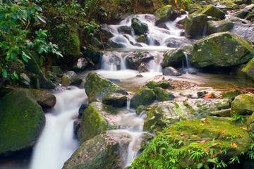 san-juan-excursion-demi-journee-foret-yunque
