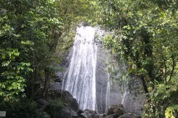 Excusión de medio día a El Yunque selvas tropicales desde San Juan