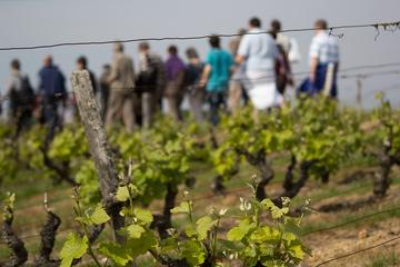 Tour of a Vineyard, Winery and Cellar Including Wine Tasting in Vouvray in the Loire Valley