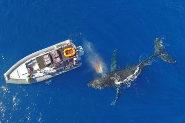 Whale Watch Adventure