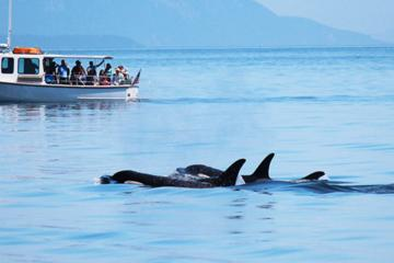 San Juan Islands Whale Watching Tour