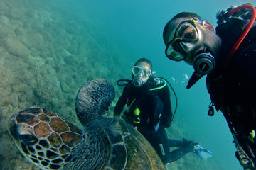 3-Hour Scuba Diving Baptism at...
