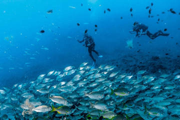 Scuba Diving for Licensed Divers in...