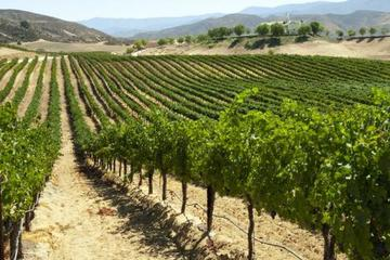 Private Napa and Sonoma Wine Tasting Tour