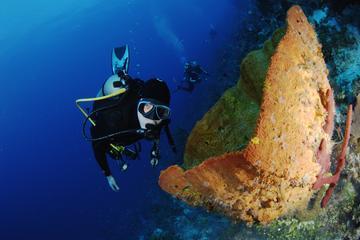 PADI Discover Scuba Diving in Paraiso