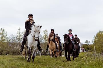Horseriding tour in Akureyri
